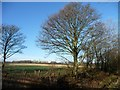 SE3929 : Winter tree on a field boundary by Christine Johnstone