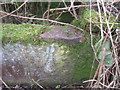SE1611 : Rivet benchmark on a trough near Farnley Moor End by John Slater