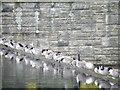 SE2100 : Duck Line-up at Langsett Reservoir, Langsett, near Stocksbridge - 4 by Terry Robinson