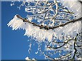 TL8063 : Hoar frost on a branch by Bob Jones