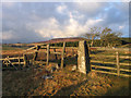 NU0303 : Fence with gate on bridleway by Trevor Littlewood