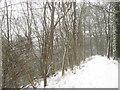 TQ2908 : Footpath, Coney Wood by Simon Carey