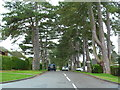 TQ1755 : Fir Tree Road, Leatherhead by Alexander P Kapp