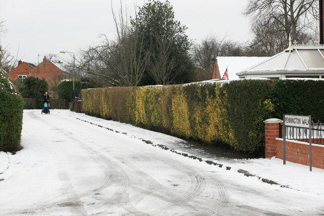 Pennington Walk in the snow