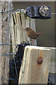 HP6308 : Shetland Wren (Troglodytes troglodytes zetlandicus), on a fence, Baltasound by Mike Pennington