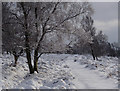 SK2874 : Ramsley Moor footpath in snow by Andrew Hill