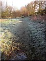SX8771 : Frost, Aller Brook Local Nature Reserve by Derek Harper