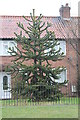 SK7755 : Double Monkey Puzzle Tree by J.Hannan-Briggs