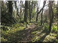 SX8767 : Woodland at Kerswell Down Hill by Derek Harper