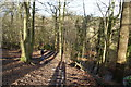 SJ8283 : Woodland path above the Bollin by Bill Boaden