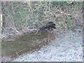 ST9898 : River Thames - Fosse Way Culvert by John M