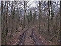 TQ6888 : Track into Hoppit Shaw, Langdon Nature Reserve by Roger Jones