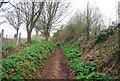 SX9371 : South West Coastal Path by N Chadwick