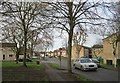 TL4756 : Lichfield Road trees - February by John Sutton