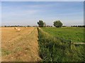 TL3689 : Fields on Dyke Moor eastwards by Andrew Tatlow