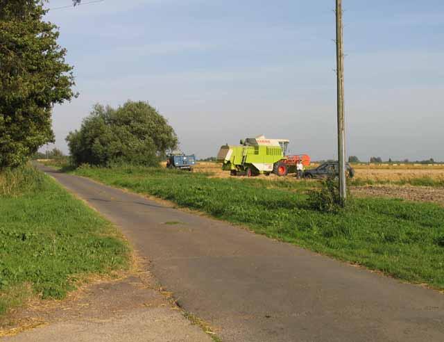 Harvesting by Dykemoor Drove