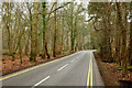 TQ0858 : Old Lane, Ockham Common, Surrey by Peter Trimming