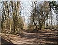 SK4955 : Portland Park Nature Reserve NG17, Notts. by David Hallam-Jones