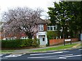 SU4413 : Blossom on Glenfield Avenue by Shazz