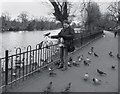 TQ3470 : Pigeons In The Park by Des Blenkinsopp