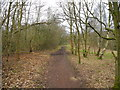 SJ9493 : Haugton Dale Nature Reserve by John Topping