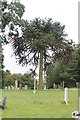 SK9246 : Monkey Puzzle Tree in the churchyard by J.Hannan-Briggs