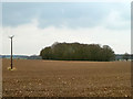 TL7529 : Wood across a ploughed and harrowed field by Robin Webster