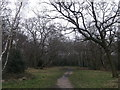 TQ3988 : Woodland Path in Epping Forest by David Anstiss