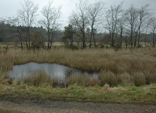 Pond, Juggler's Moor, Stanswood