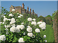 SK4851 : Viburnum at Felley Priory Gardens by Trevor Rickard