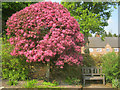 SK4851 : Blossom tree at Felley Priory gardens by Trevor Rickard