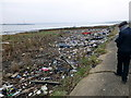 TQ5478 : Rubbish on banks of River Thames at Rainham Marshes by PAUL FARMER
