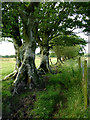 SN5855 : Ancient field boundary south of Gartheli, Ceredigion by Roger  Kidd