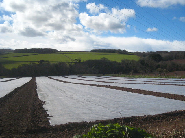 Plasticulture in fields between Lelant and Carbis Bay