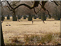 SJ7386 : Dunham Massey Deer Sanctuary by David Dixon
