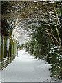 SO9096 : Footpath in Penn, Wolverhampton : Week 13