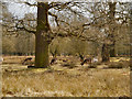 SJ7386 : Dunham Massey Deer Park by David Dixon