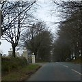 SX4778 : Trees lining the road at Wallabrook by David Smith
