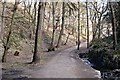 SJ9581 : Path to Lyme by Trevor Harris
