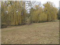 TL5126 : Weeping Willows in Aubrey Buxton Nature Reserve by Roger Jones