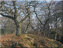 NH5857 : Drummondreach Wood by Julian Paren