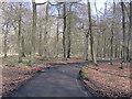 SU7688 : Dudley Lane snakes through Gussetts Wood by Stuart Logan