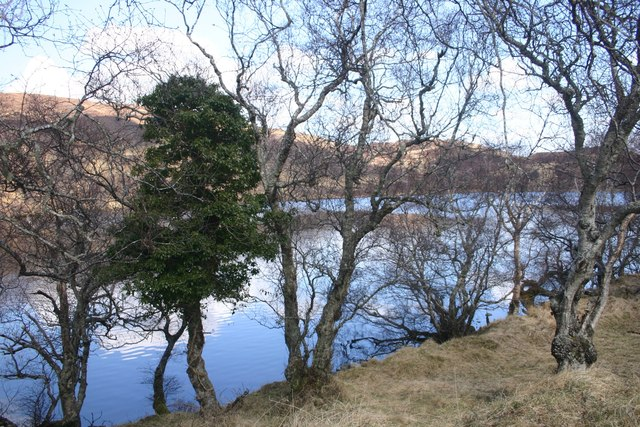 Trees by the Lochan