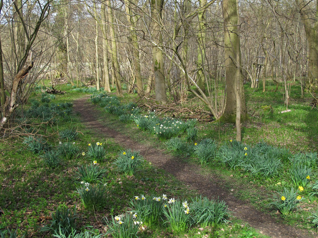 Daffodils in Turner's Spring Nature Reserve
