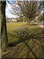 SE3155 : Crocuses by Oatlands Drive, Harrogate by Derek Harper