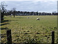 TF7917 : Grazing sheep near High House, West Acre by Richard Humphrey