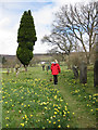 SE6797 : A path through the daffs by Pauline Eccles