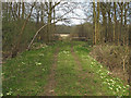 TL8126 : Primrose lined track in Broadfield Wood, Brookes Reserve by Roger Jones
