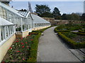 TQ2476 : The glasshouses and vinery within the walled garden at Fulham Palace by Ian Yarham