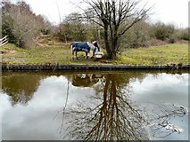 SJ9493 : Reflection in the Peak Forest Canal by Gerald England
